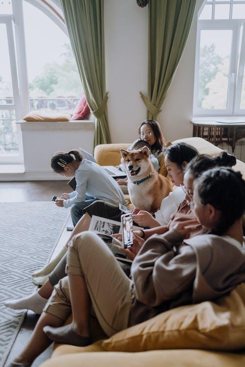 Mann Im Grauen Pullover Sitzt Auf Weißer Couch Neben Braunem Und Weißem Hund