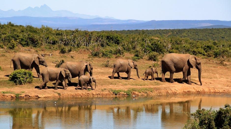 Kanha National Park
