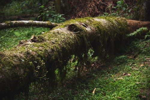 Fotos de stock gratuitas de árbol, bañador, baúl
