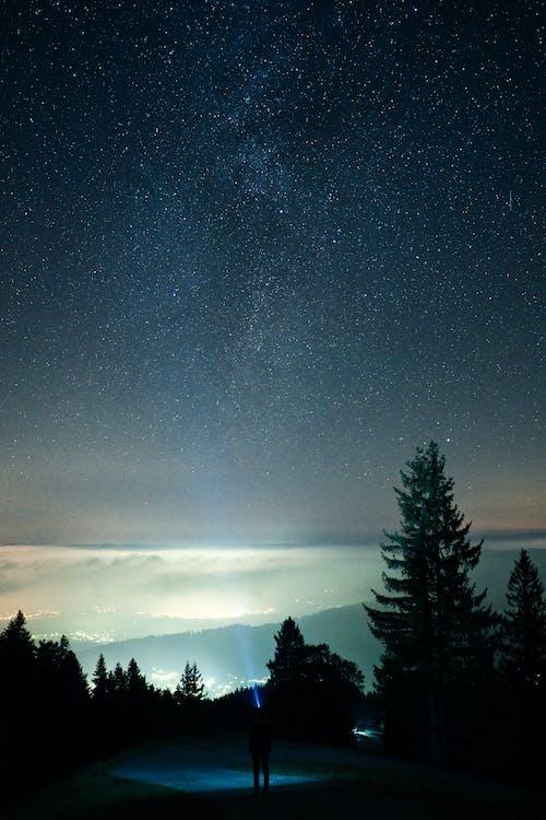 繁星之夜下的樹木剪影