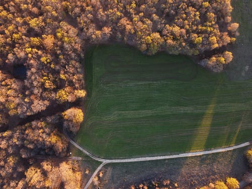 Drone view of lush vast field surrounded by autumn forest