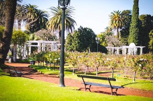 Imagine de stoc gratuită din Argentina, bruno scramgnon fotografia, buenos aires, floare