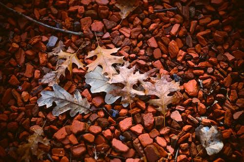 Imagine de stoc gratuită din Argentina, bruno scramgnon fotografia, buenos aires, grădină botanică