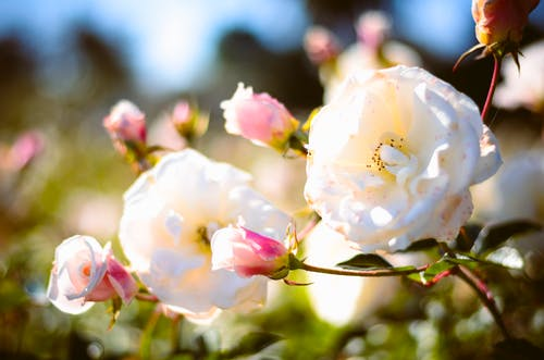 Photos gratuites de Argentine, bruno scramgnon fotografia, buenos aires, fleur