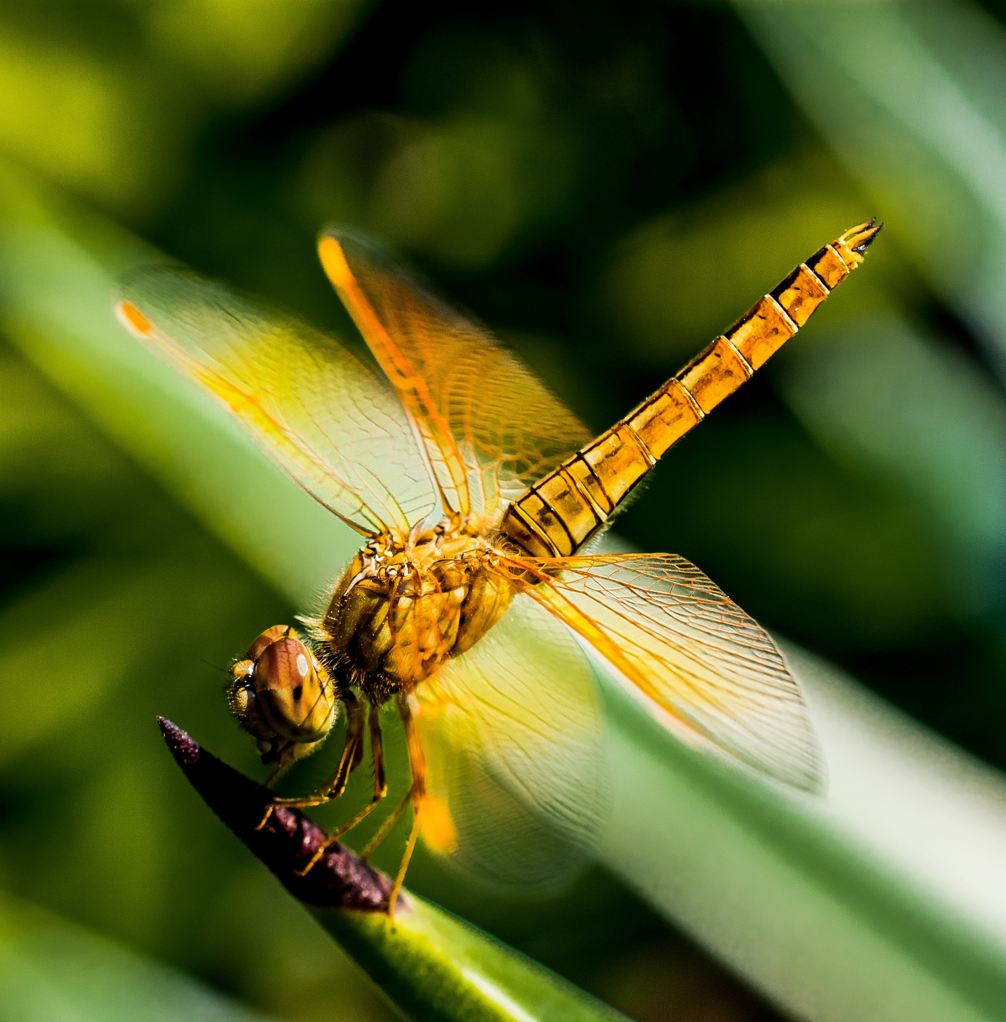 Yellow Black Dragon Fly on Green Leaf Plant