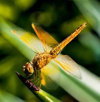 Yellow Black Dragon Fly on Green Leaf Plant