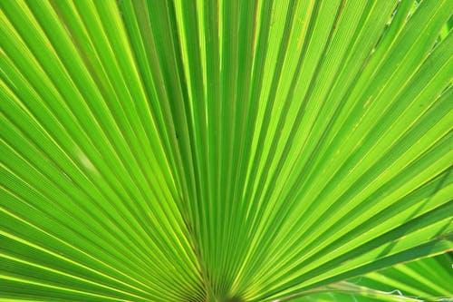 녹색, 부채야자, 식물, 클로즈업의 무료 스톡 사진