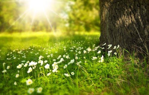 Biały Kwiat Kwitnący Pod Drzewem W Ciągu Dnia