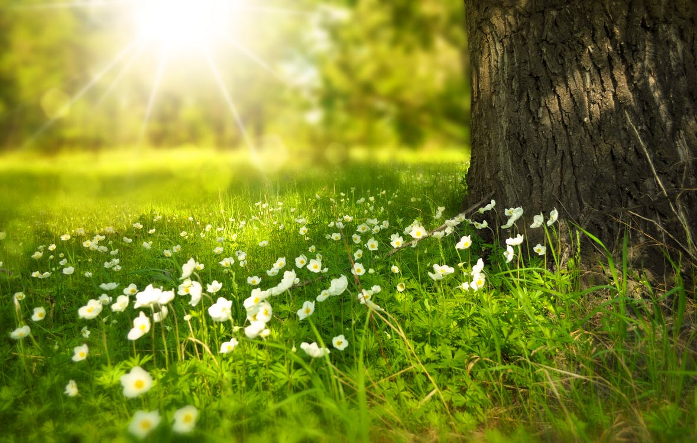 白天在樹下的白花盛開