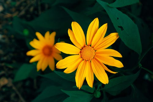 Gratis stockfoto met bloemen, close-up, detailopname, geel