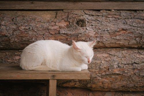 Gratis stockfoto met houten achtergrond, houten stoel, kat, katje
