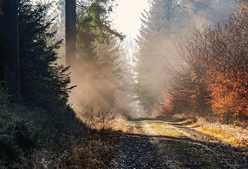 Brown Dirt Road Between Trees Covered With Fog