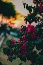 nature, sunset, flowers