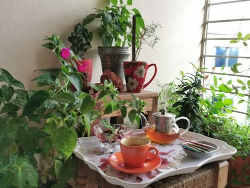 Free stock photo of belcony, tea break, tea time