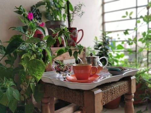 Free stock photo of early morning, Good Morning, tea break, tea time
