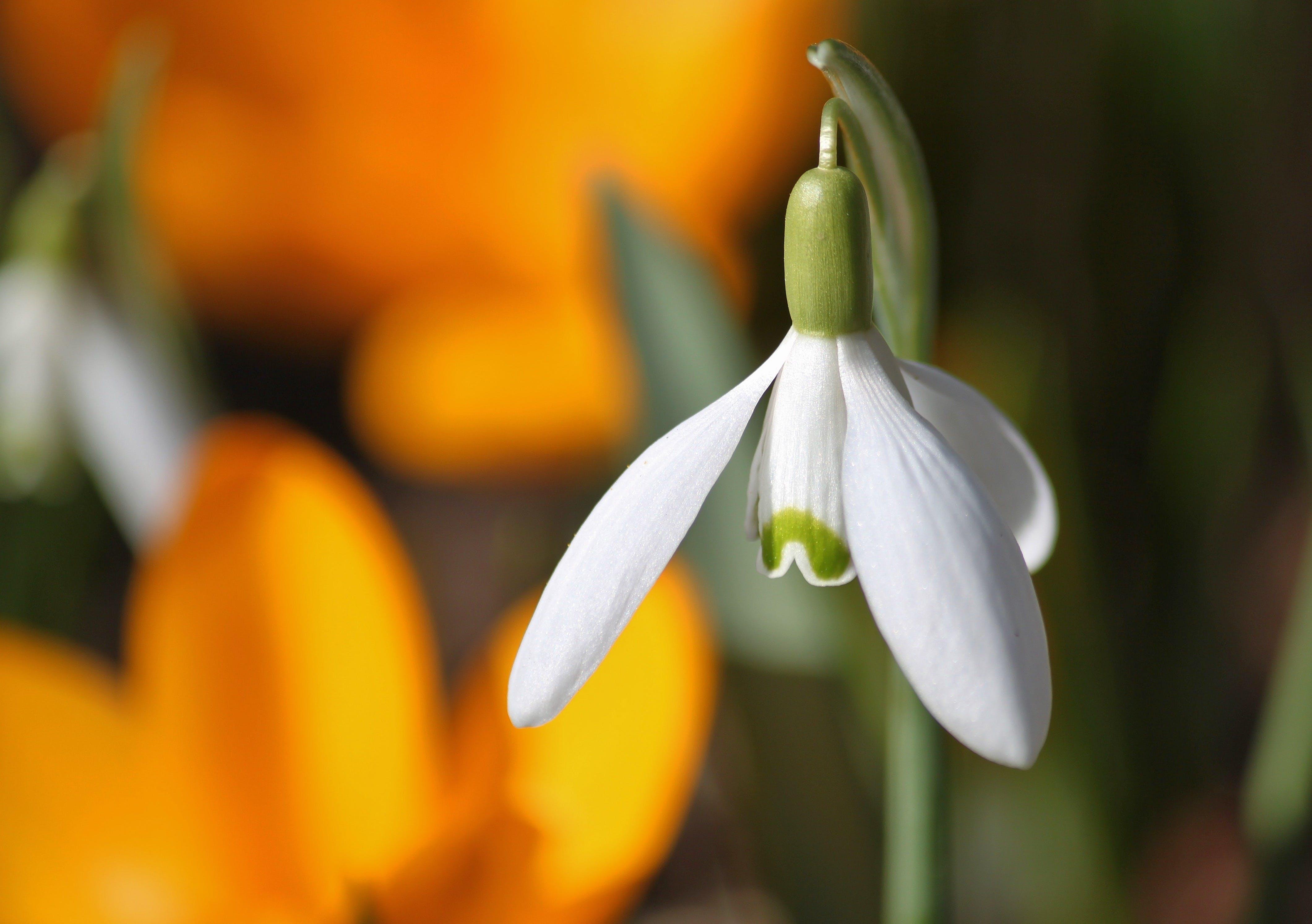 White Flower Bud
