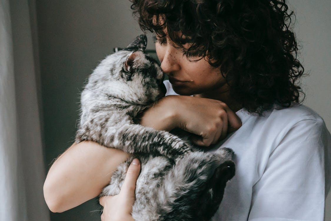 Crop calm female in white t shirt embracing adorable fluffy cat with gray fur