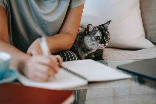 Crop anonymous busy female taking notes in copybook while spotty adorable little cat resting on gray couch