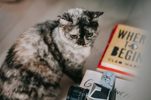 Cute purebred cat sitting near books and photo camera and looking away