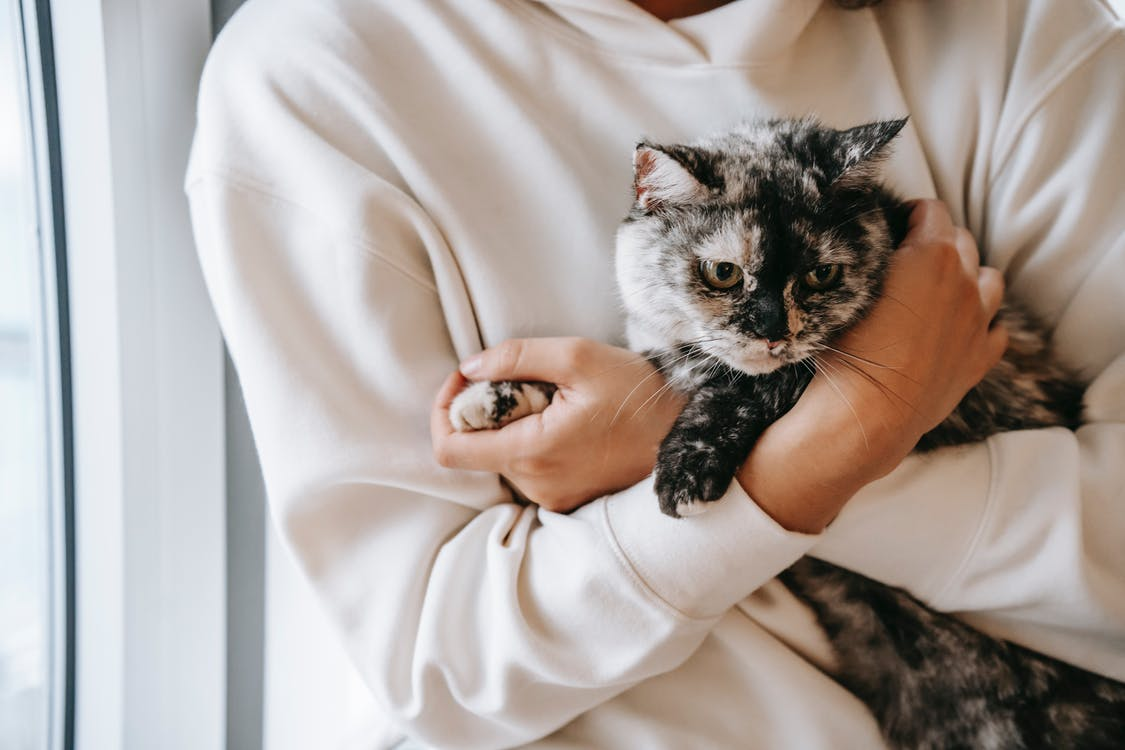 Crop unrecognizable female in soft wear embracing gently cute cat in house in daytime