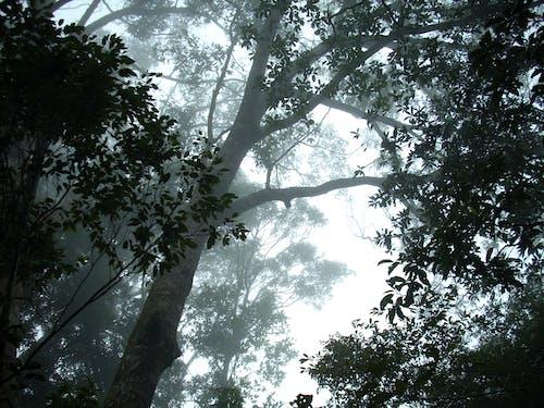 Free stock photo of dark green, Hainan Island, rain forest
