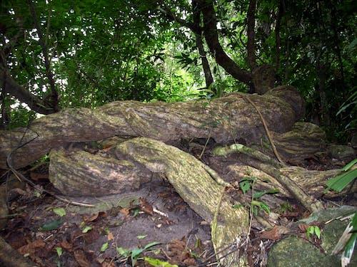 Free stock photo of fallen bark, Hainan Island, rain forest