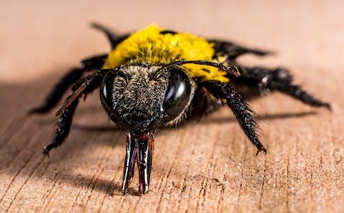 Δωρεάν στοκ φωτογραφιών με macro, γκρο πλαν, έντομο
