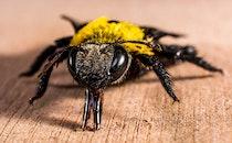 insect, macro, close-up