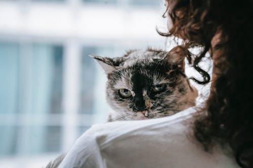 Cute cat in hands of crop owner