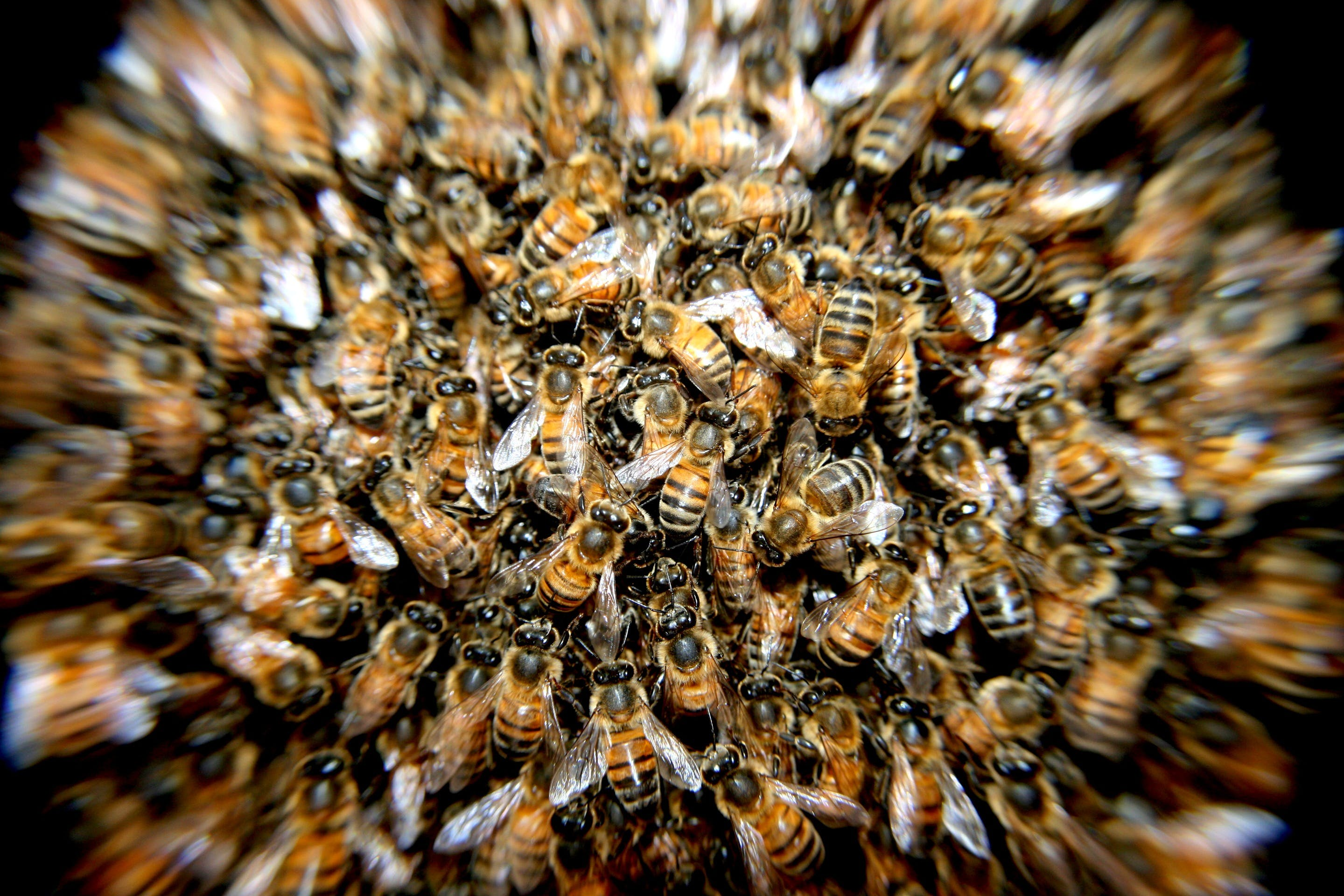 bees, blur, insects
