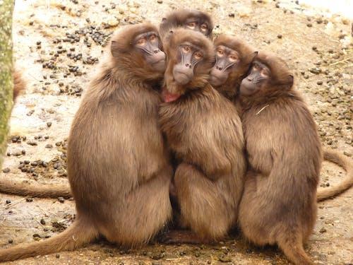 낮에 야외에서 함께 모여 든 다섯 원숭이
