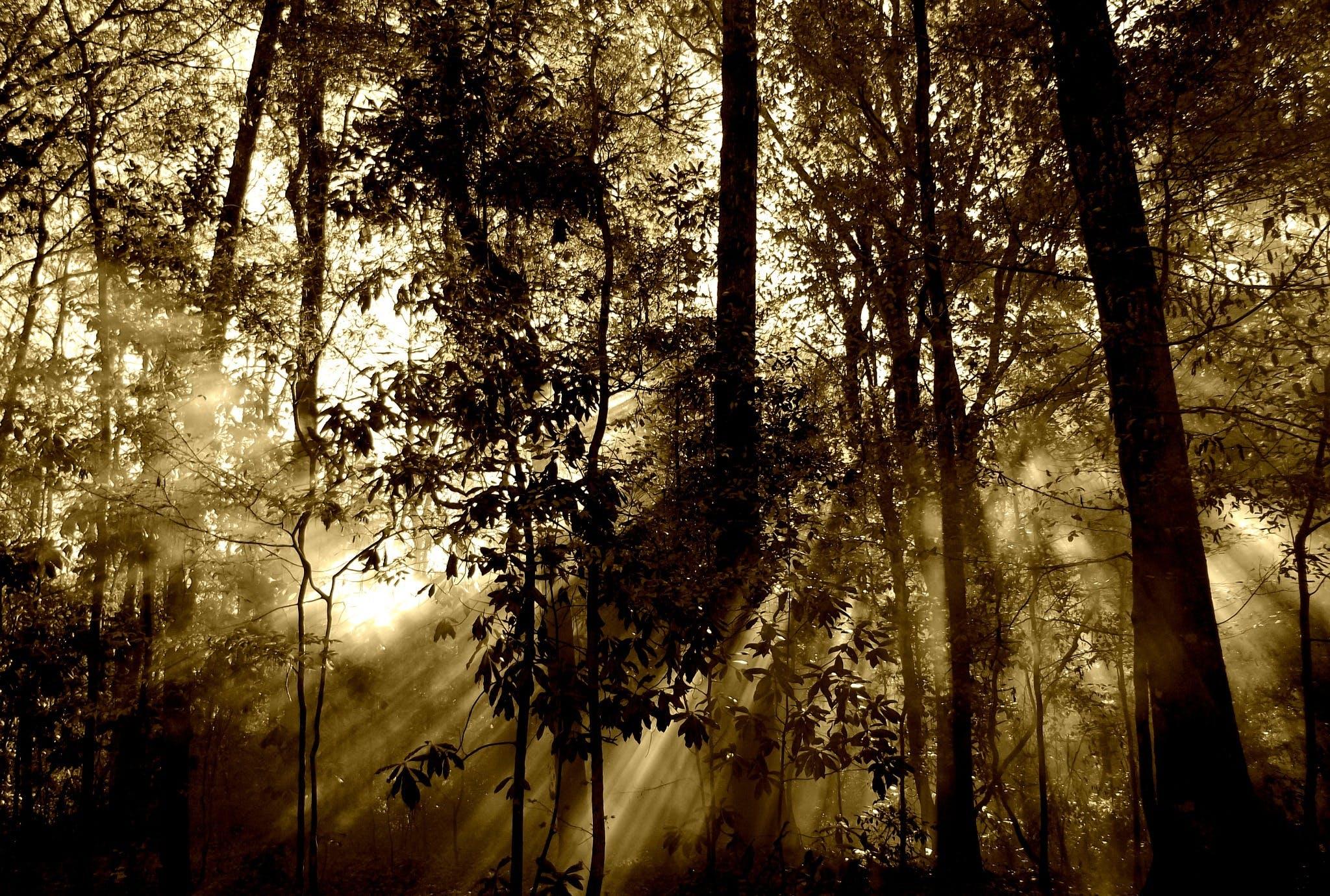 คลังภาพถ่ายฟรี ของ ต้นไม้, ธรรมชาติ, ป่า, รังสีอาทิตย์
