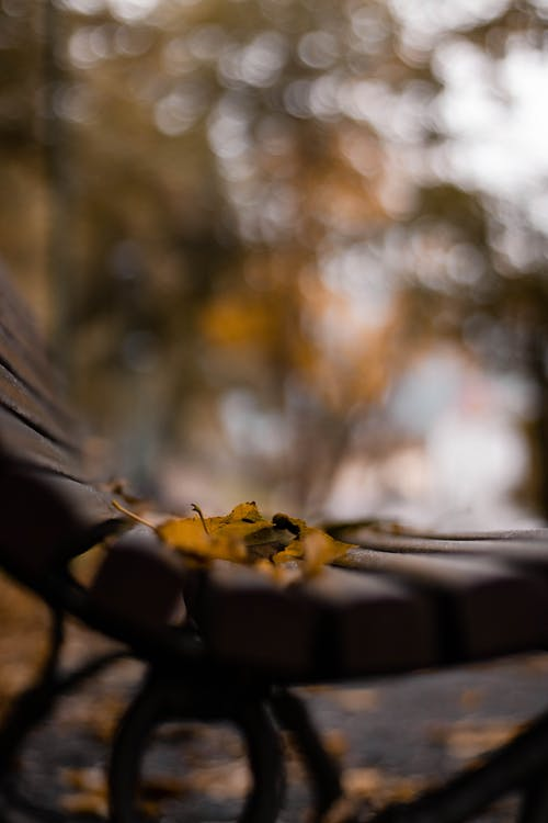 Yellow Leaves on Brown Wooden Table