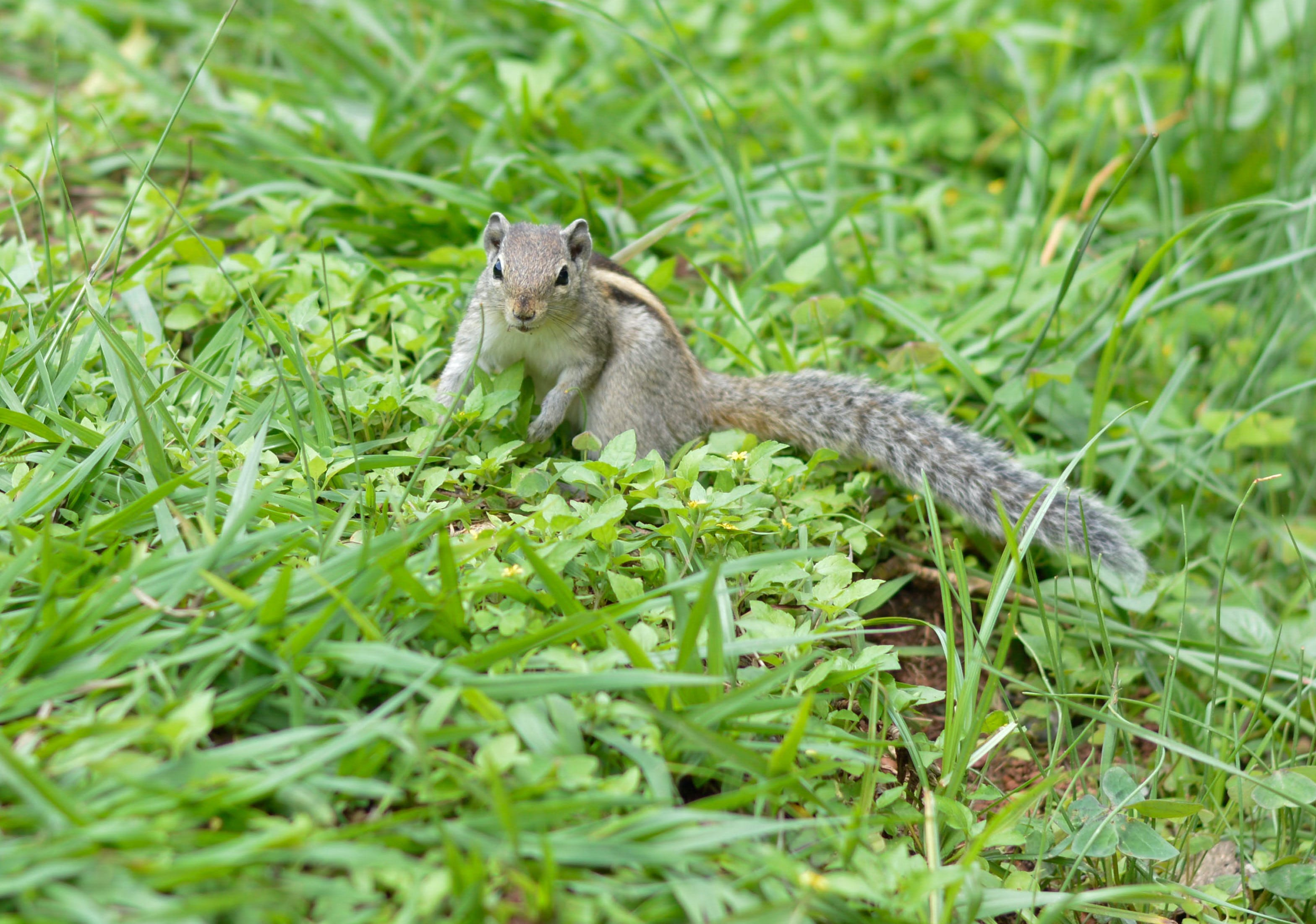 Shallow Focus Photography of Gray Squirrel on Grass