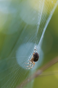 Kostenloses Stock Foto zu tier, makro, spinnennetz, spinne
