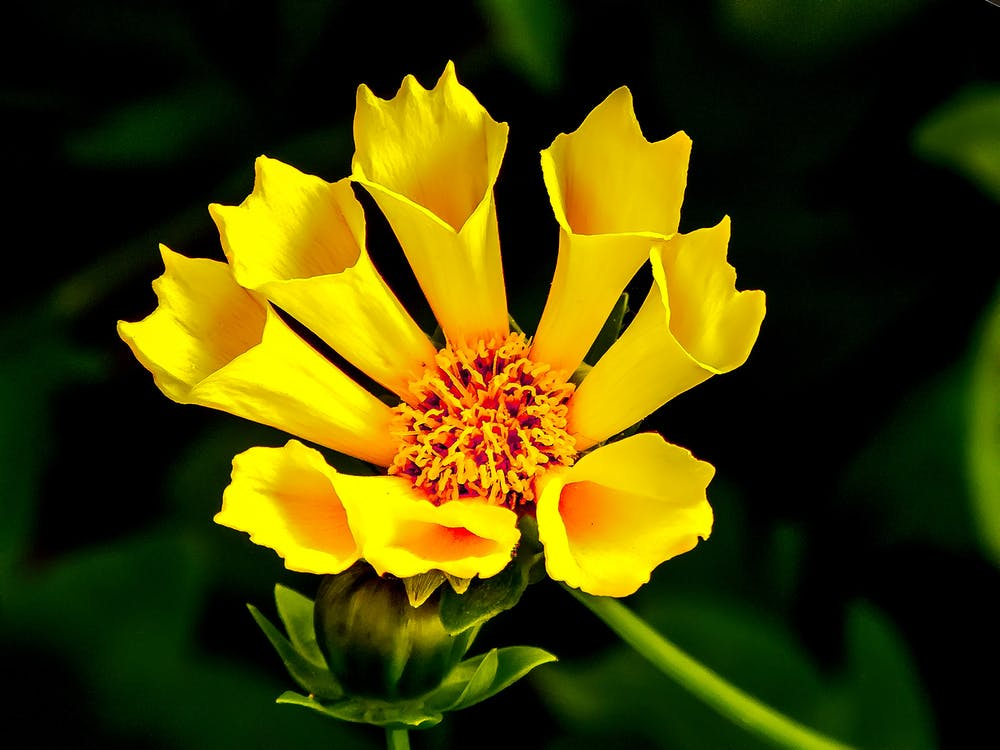 Yellow Flower in Macro Lens Photography