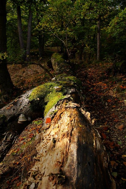 Бесплатное стоковое фото с дерево, деревья, зеленый, лес