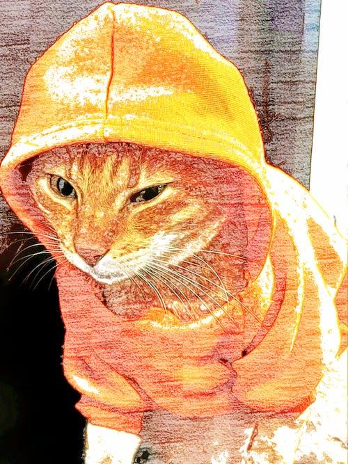 Free stock photo of cat, cat hoodie, cute