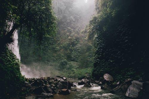 Rivier In Het Midden Van Bos