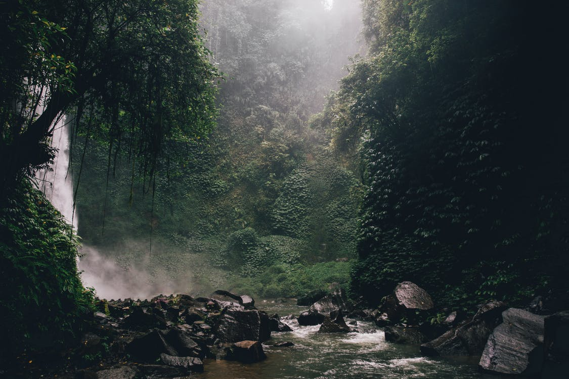 Rzeka W środku Lasu