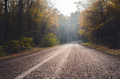 Ingyenes stockfotó aszfalt, az ősz színei, esés témában