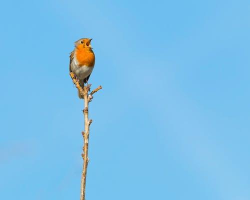 Imagine de stoc gratuită din animal, aviar, avion