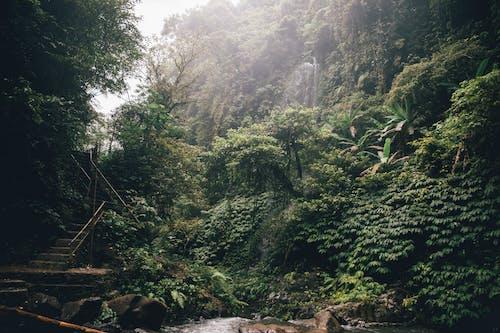 Ilmainen kuvapankkikuva tunnisteilla ikivihreä, kasvit, lehdet