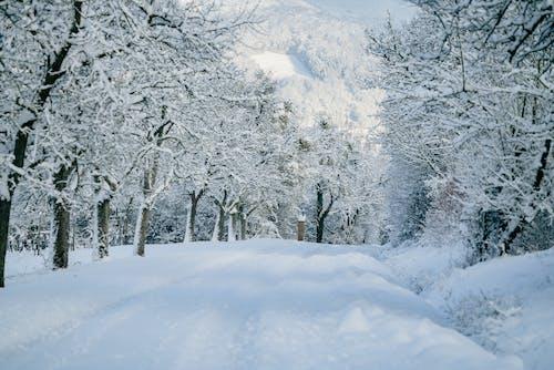 不變, 冒險, 冬季 的 免費圖庫相片
