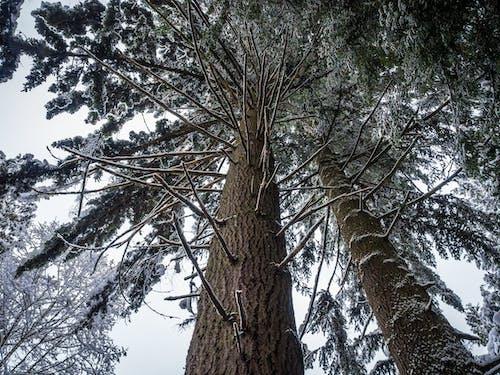Imagine de stoc gratuită din arbori, copaci, crengi, fotografie cu unghi mic