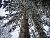 snow, nature, trees