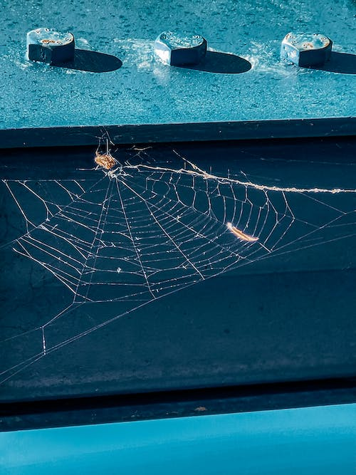 Free stock photo of beauty of nature, bolt, spider web