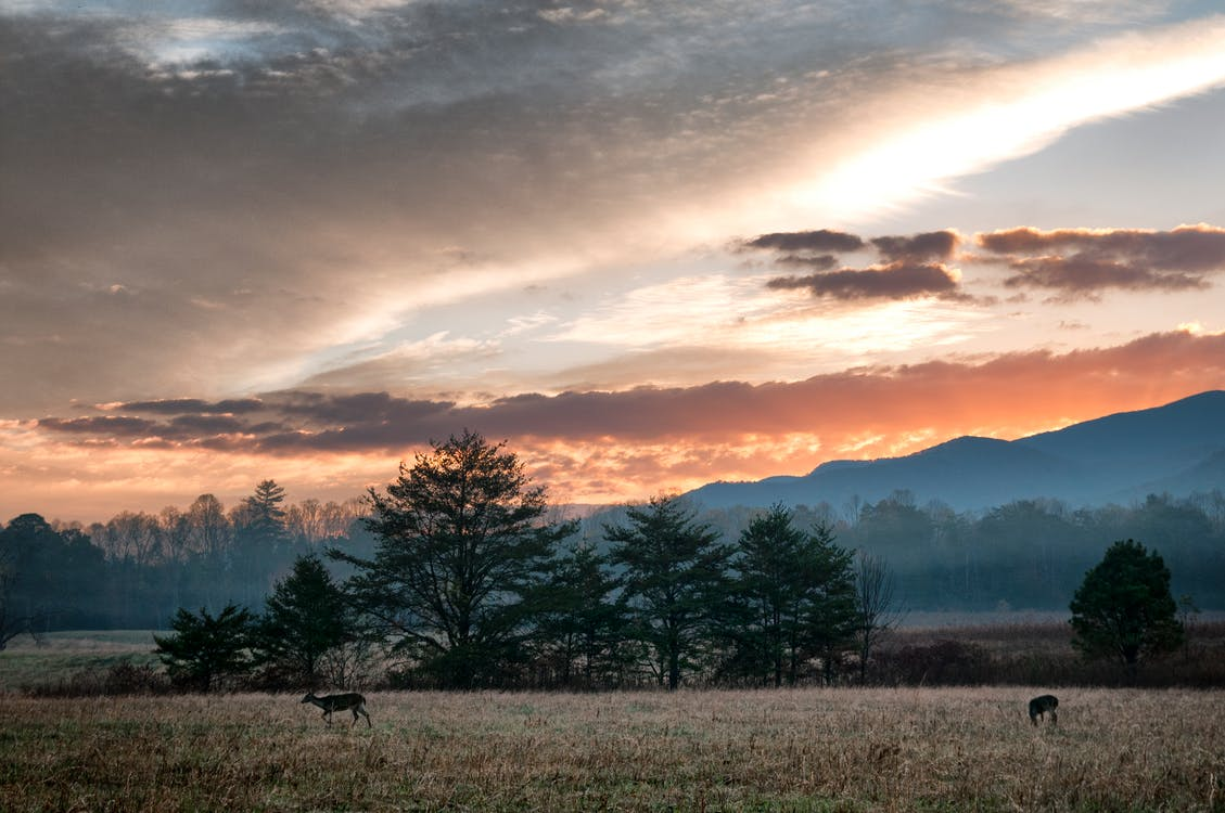 Free stock photo of deer, Great Smokey Mountains, sky