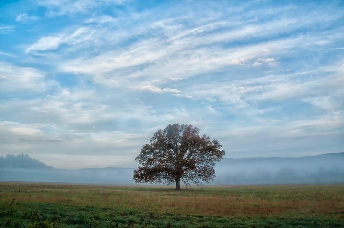 Free stock photo of fog, Great Smokey Mountains, sky