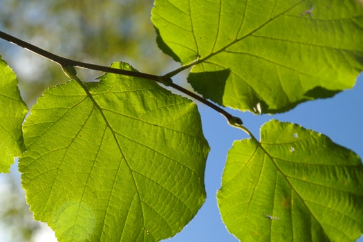 Green Round Leaves during Daytime